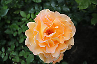 Blumenbilder 2010
